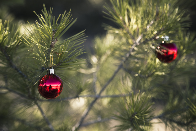 christmas-tree-in-nature-with-red-balls_23-2147720609